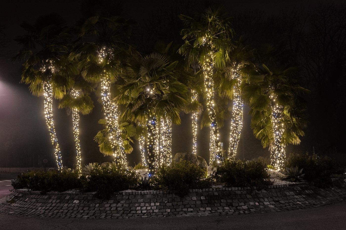 Illumination Plessis palmiers 2019
